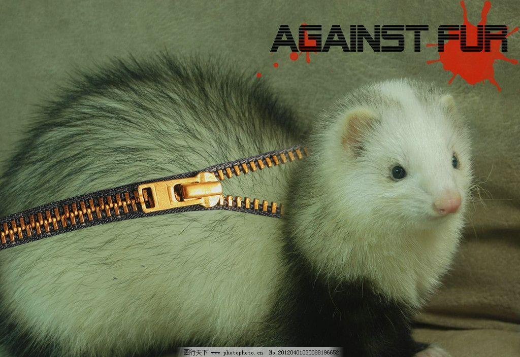 反对皮草 环保设计 环保海报 动物海报 广告设计模板 源文件