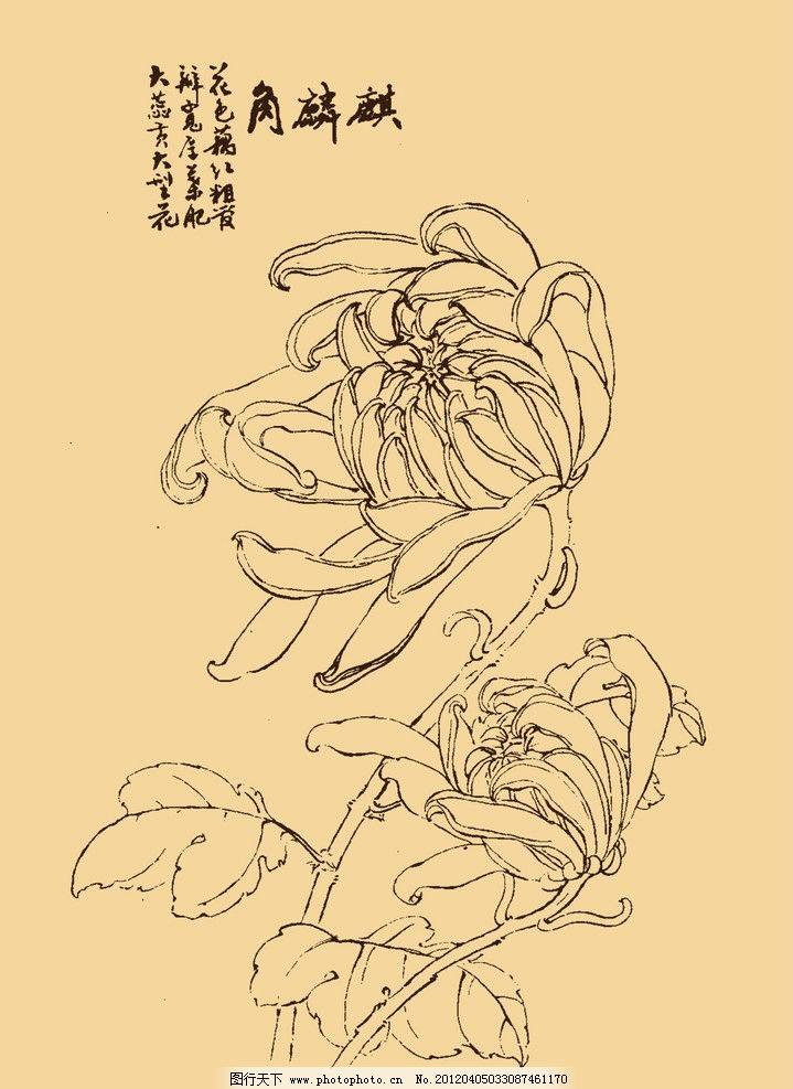 菊花图片,秋菊 白描 国画 中国画 勾勒 线条 中国风