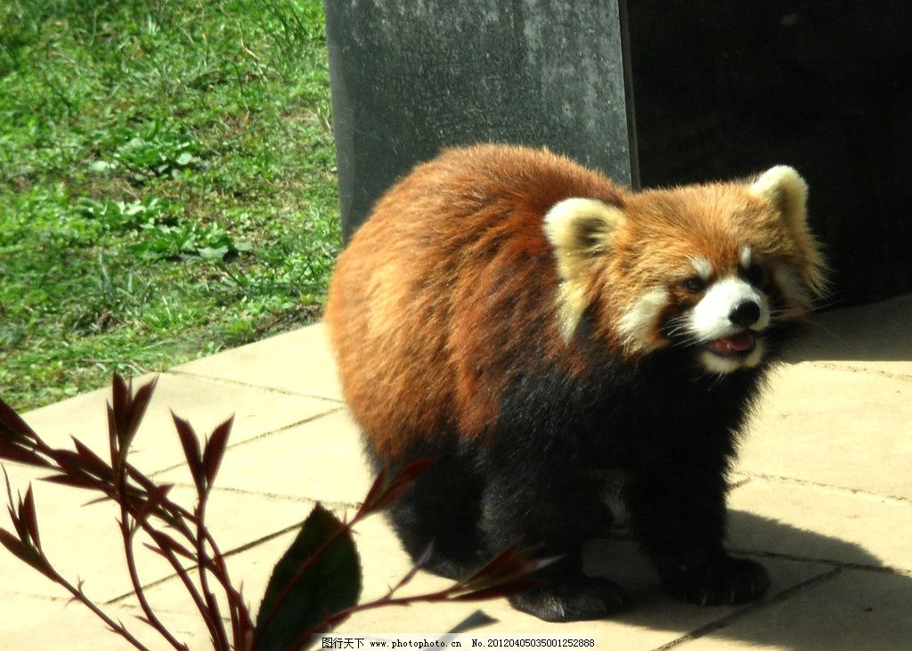 浣熊 自然动植物 动物 动物图片 动物照片 摄影图片 jpg 野生动物