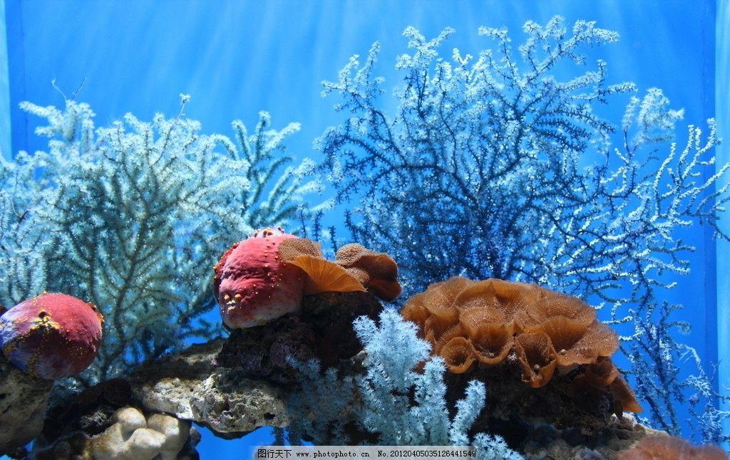 海底生物 自然风景