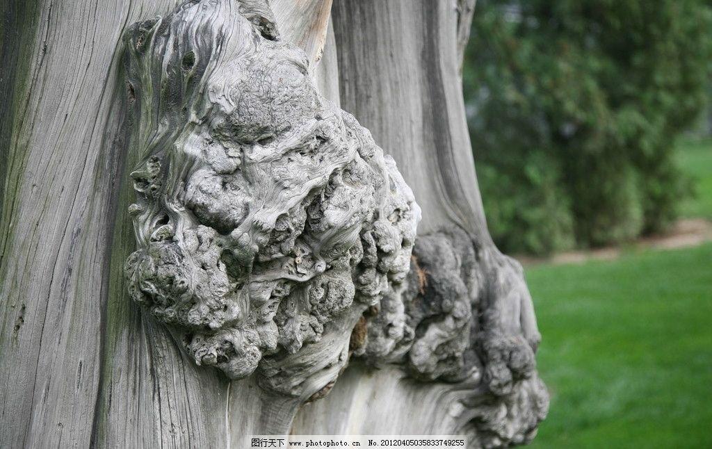 年结 树结 木头 草地 树木树叶 生物世界 摄影 72dpi jpg