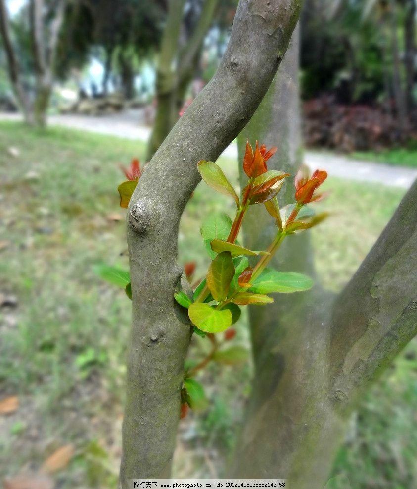 树木春芽 春芽 发芽 春天 嫩叶 树木 树叶 园林 公园 树木树叶 生物