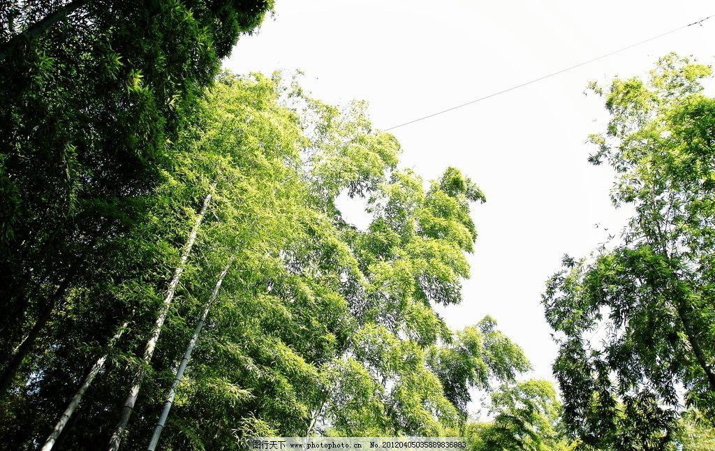 南山竹海 竹海 旅游 景点 溧阳 天目湖旅游景区 竹子 树木树叶 生物
