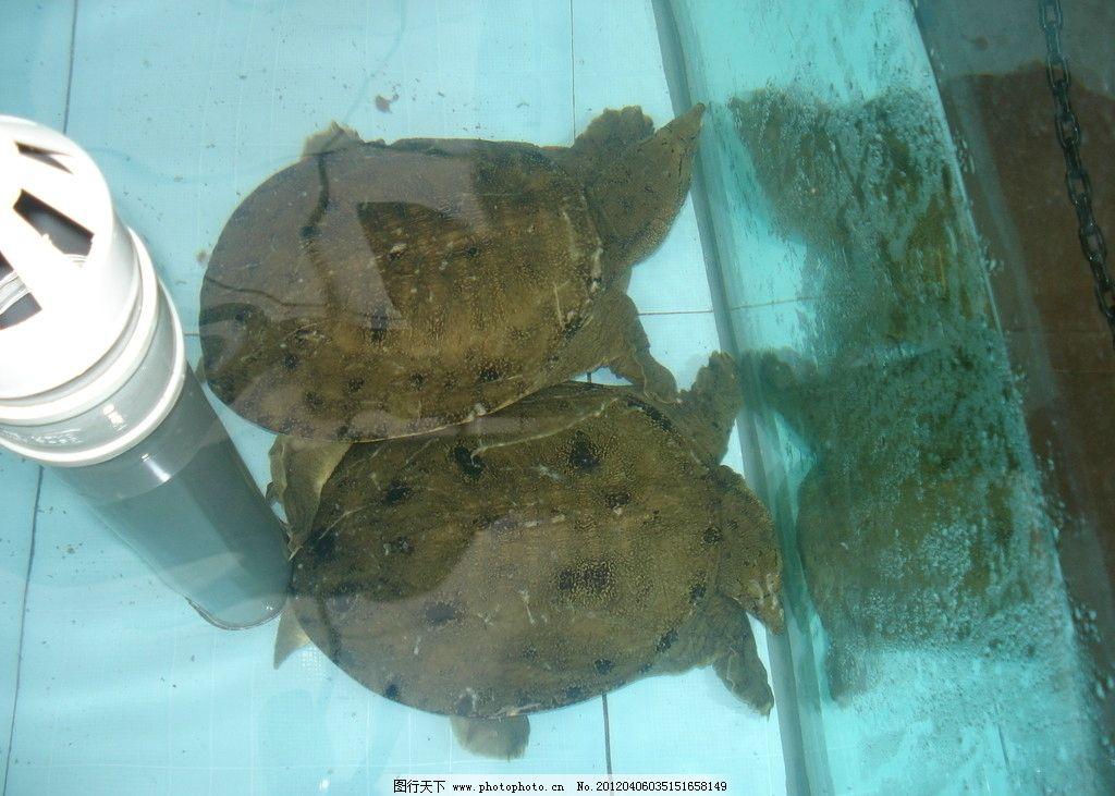 乌龟 水族管 鱼缸 水产类 爬行动物 海洋生物 生物世界 摄影