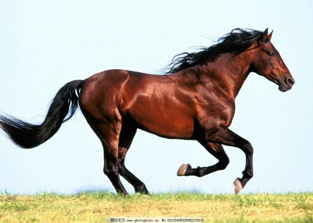 壁纸 动物 马 骑马 1024_731