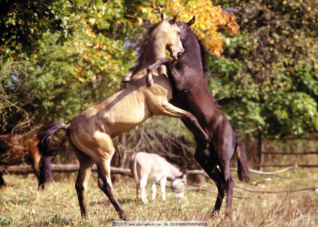 骏马图片,马高清图片 驰骋 纵横 奔跑 动物 英伦风情