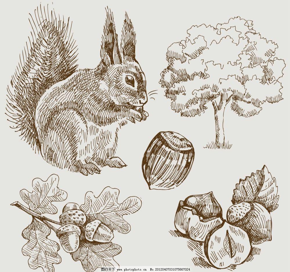 手绘松鼠榛子坚果树 手绘 松鼠 榛子 坚果树 树木 树叶 素描 矢量