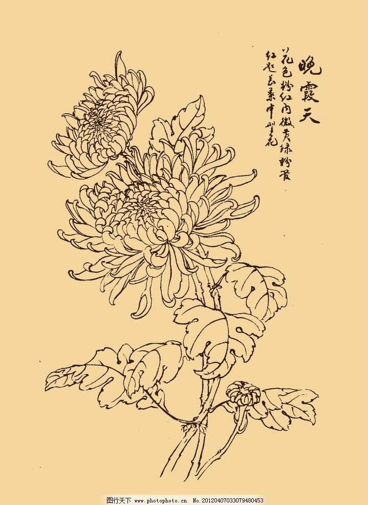 菊花 马骀画宝 兰 竹 梅 白描 国画 中国画 线描 勾勒 中国风 古典