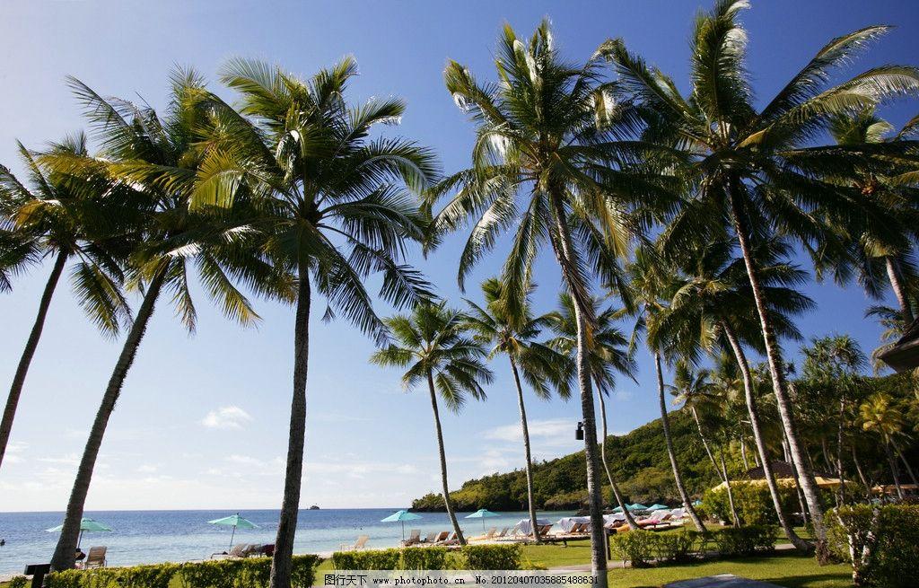 椰树 海边 海边风景 海岸 海水 海景 树木树叶 生物世界 摄影 350dpi