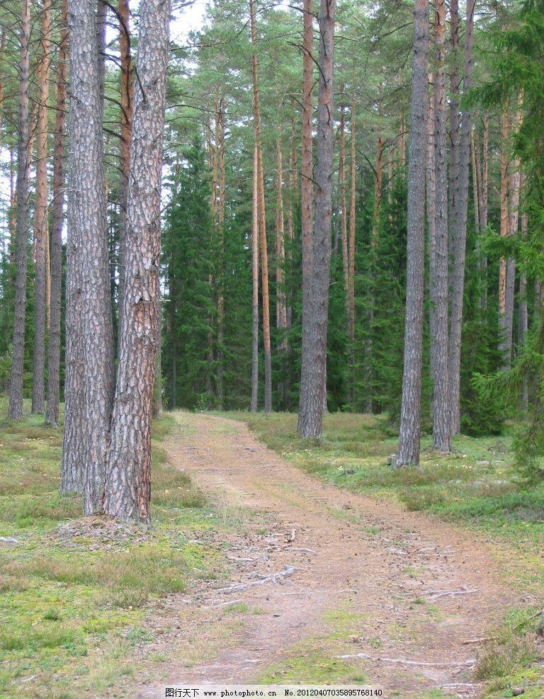 森林风光 公园 树木 大树 草地 草坪 自然 美景 清新 风景