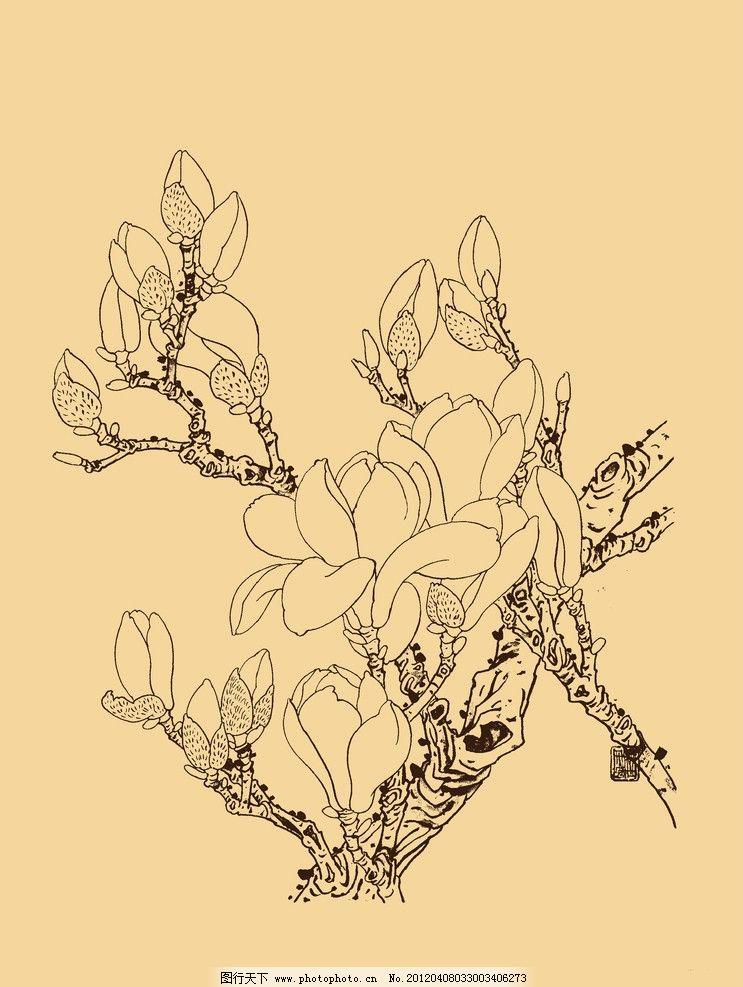 玉兰 玉兰花 白玉兰 花卉 白描 线描 勾勒 中国画 古典 中国 中国风
