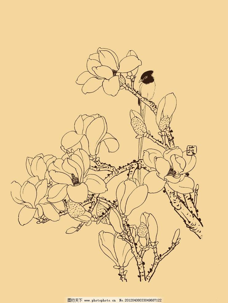 玉兰图片,玉兰花 白玉兰 花卉 白描 线描 勾勒 中国画