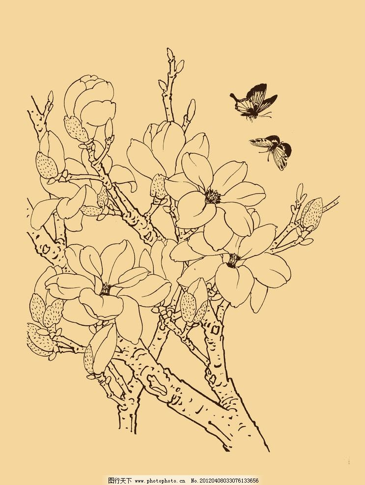 玉兰手绘简笔画