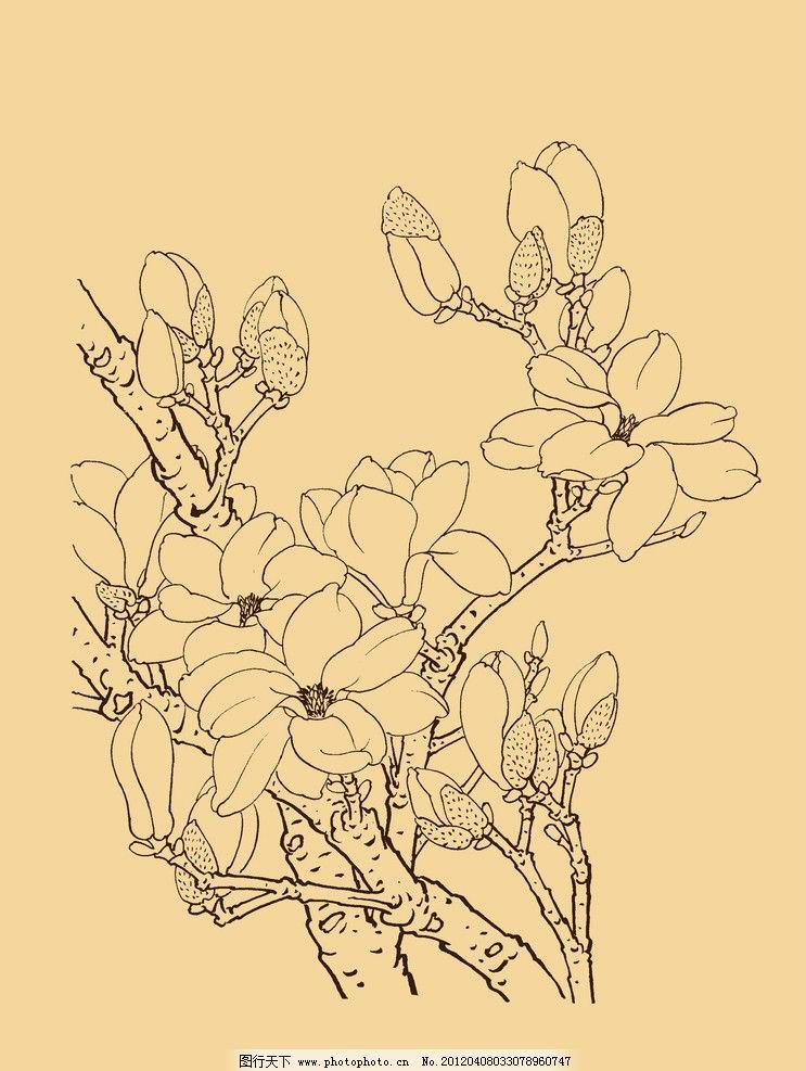 玉兰 玉兰花 白玉兰 花卉 白描 线描 勾勒 中国画 古典 中国风