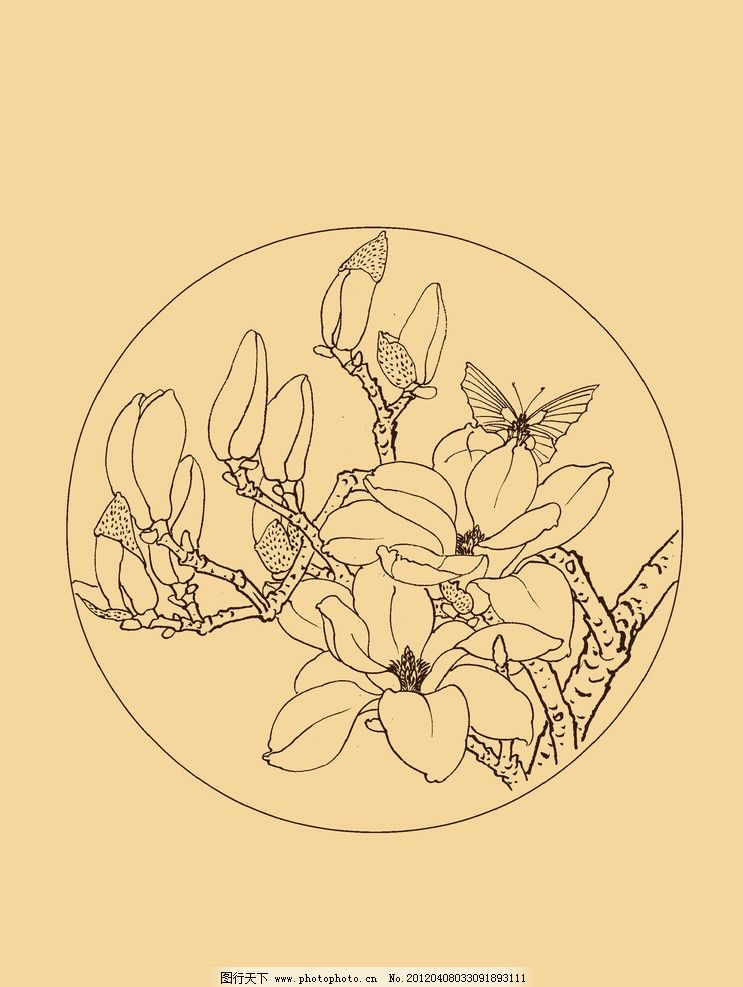 玉兰 玉兰花 白玉兰 花卉 白描 线描 勾勒 中国画 扇面 古典 中国