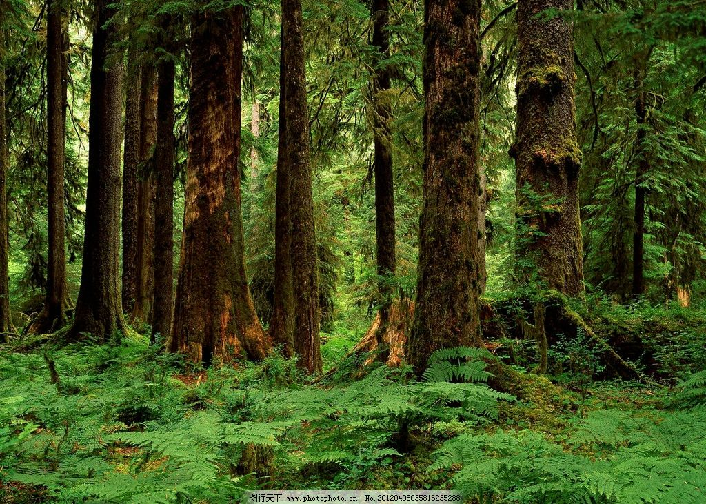 热带森林 摄影艺术 树木 树叶 植物 绿色 生物