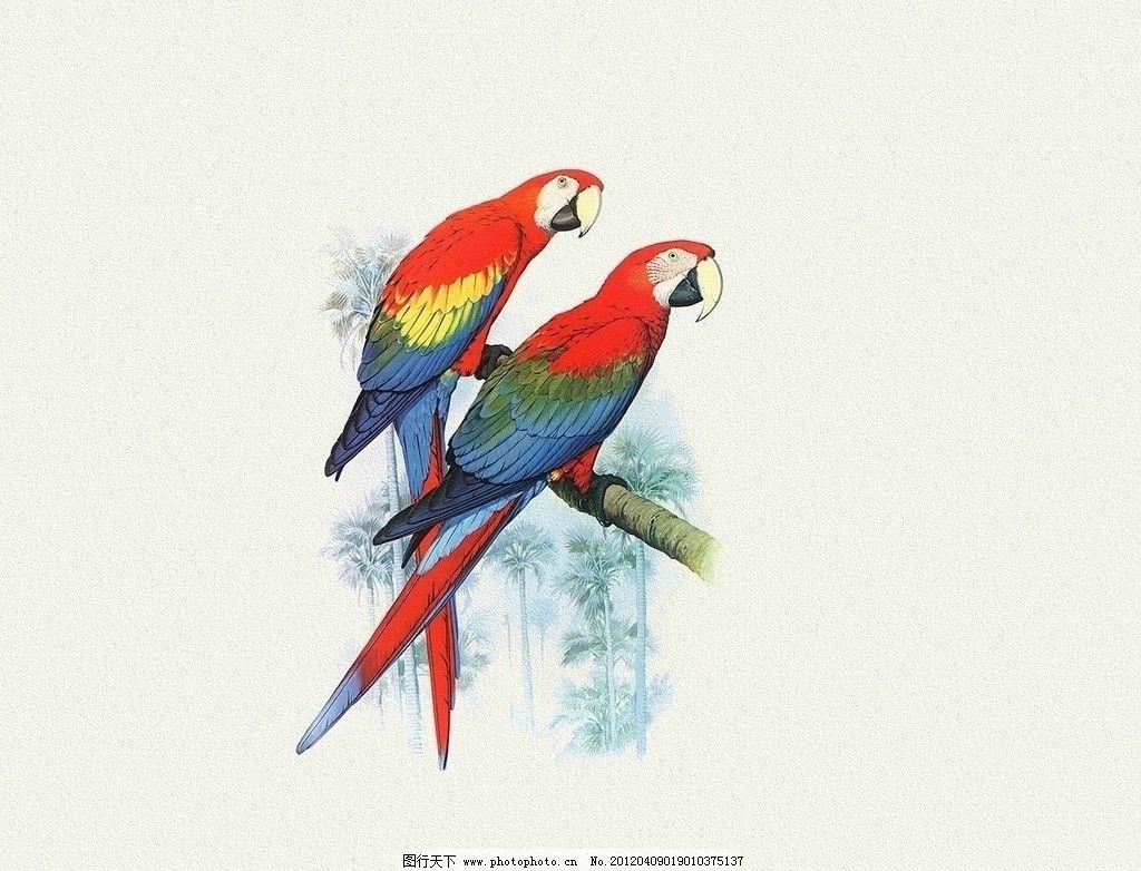手绘鹦鹉图图片
