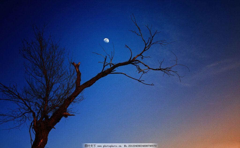枯树月亮 傍晚 月色 风景 摄影 照片 自然风景摄影 自然景观