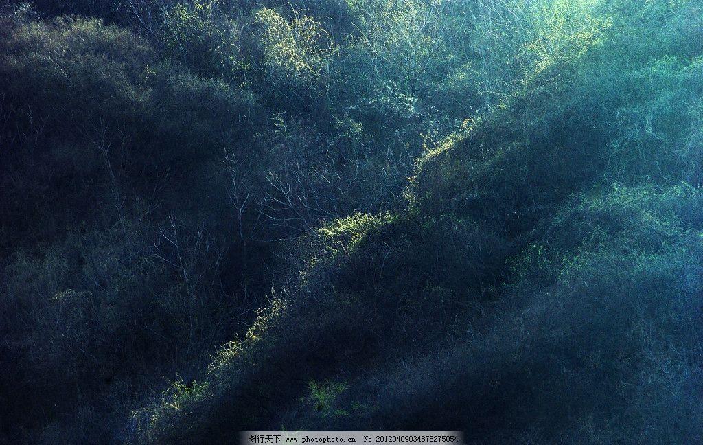 春光 春天 山中 树木 发芽 绿色 自然风景 自然景观 摄影 240dpi jpg