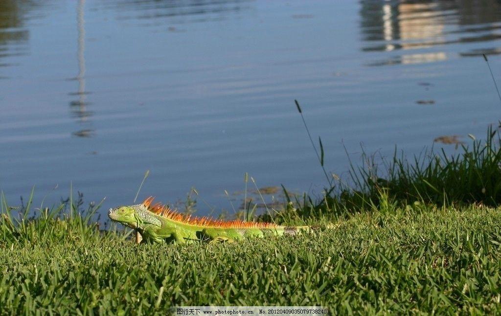 河边动物风景图片
