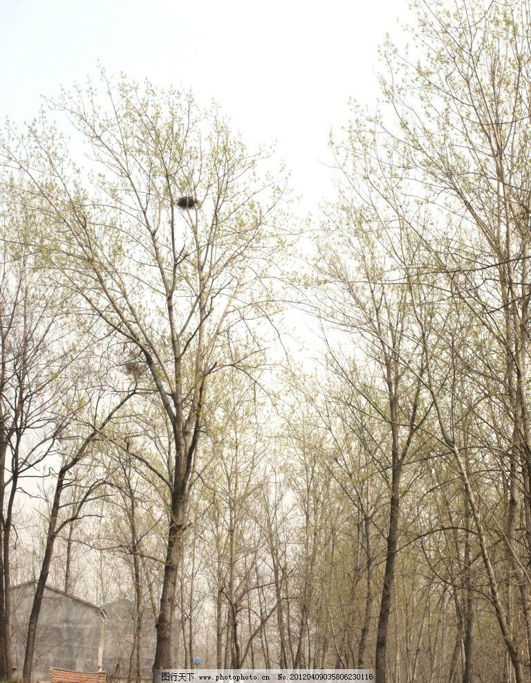鸟窝 初春 村庄 发芽的树 树木树叶 生物世界 摄影 180dpi jpg