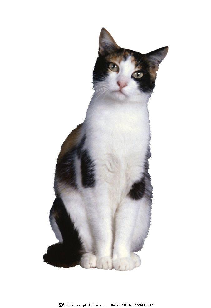 壁纸 动物 狗 狗狗 猫 猫咪 小猫 桌面 676_987 竖版 竖屏 手机