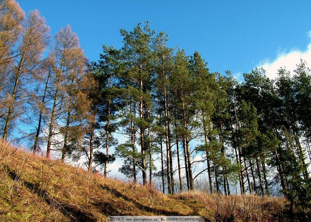 森林风光 公园 树木 大树 风景 美景 高山 山峰 景色 蓝天