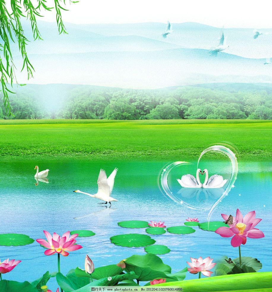 天鹅湖 天鹅 荷花 花 荷叶 柳树 柳树叶 树叶 心 鹅 池塘 移门图案 底图片