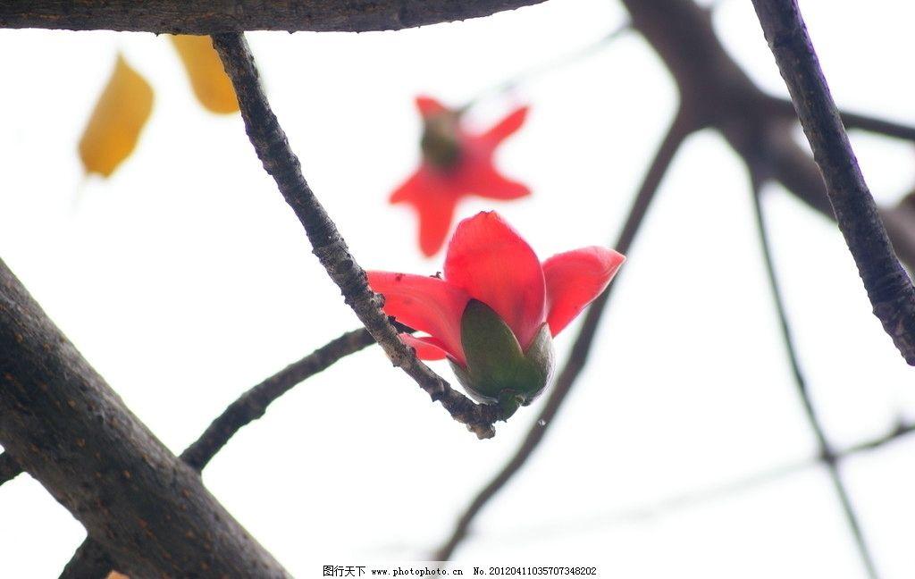 木棉花 木棉树 红花 树叶 植物 花草 生物世界 摄影 72dpi jpg