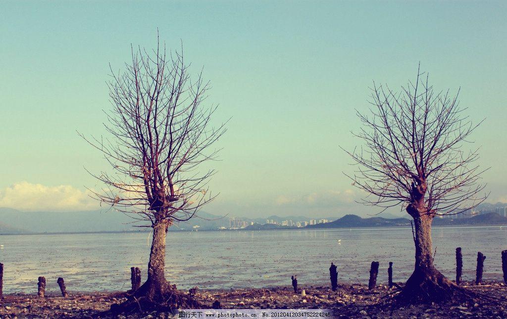 深圳红树林图片