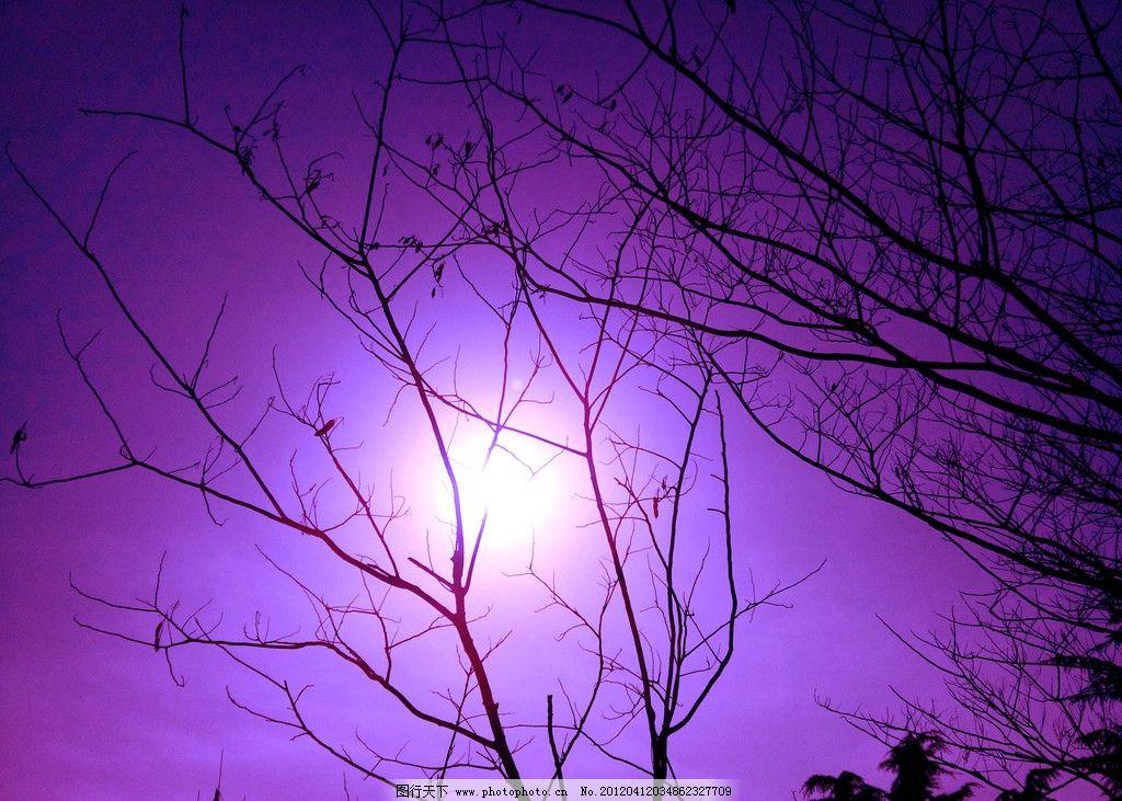 紫光之森qq背景