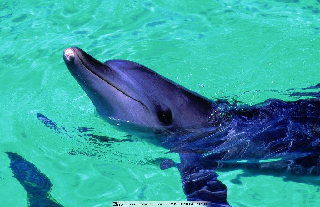 壁纸 动物 海洋动物 桌面 1024_661