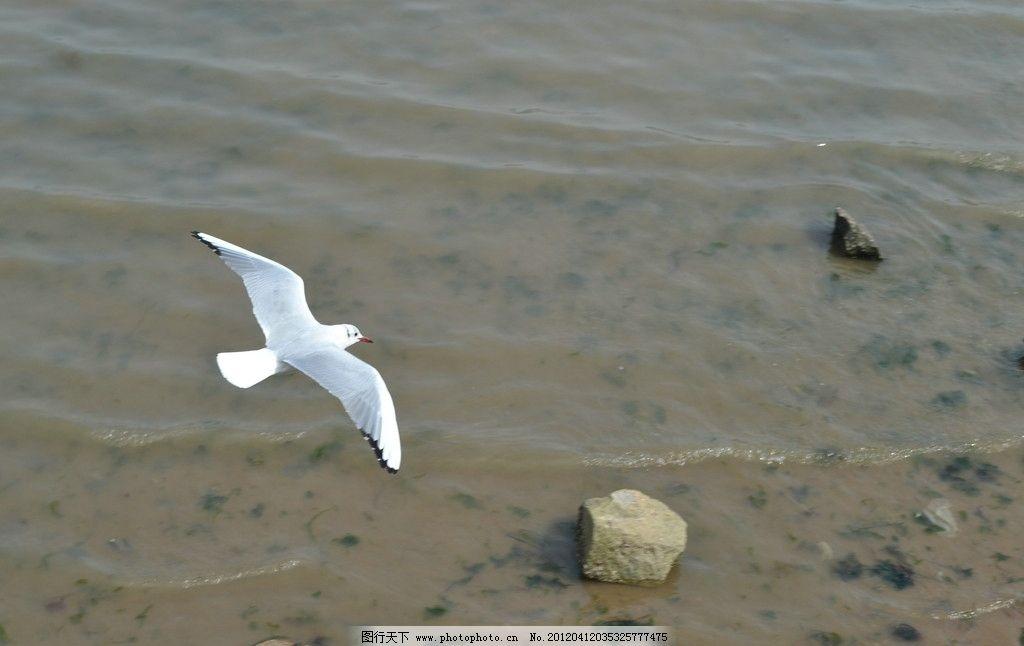飞行动物有哪些种类