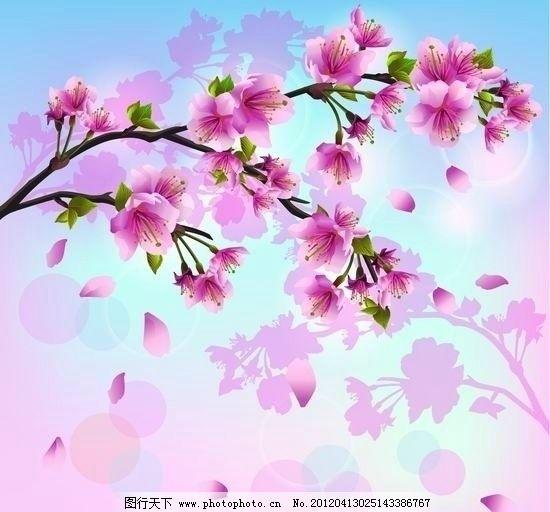 春天的樱花矢量图片