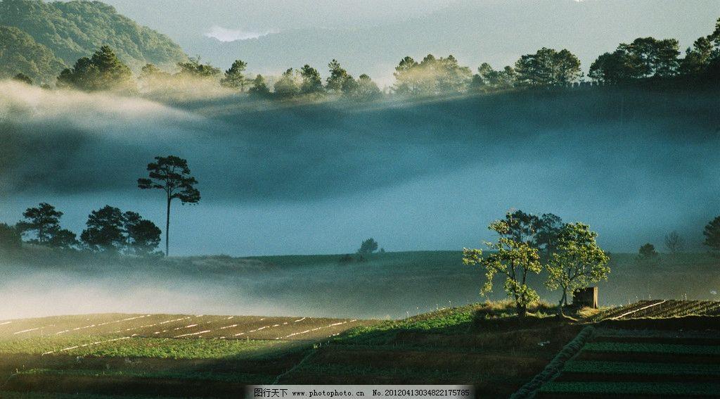 迷雾风景图片