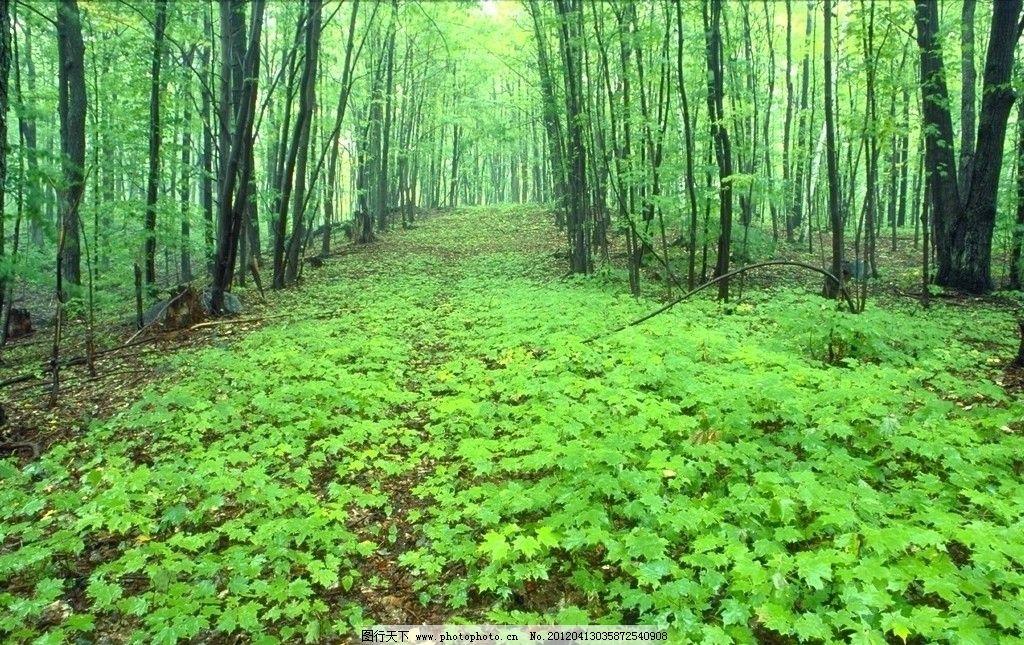 森林 树木图片