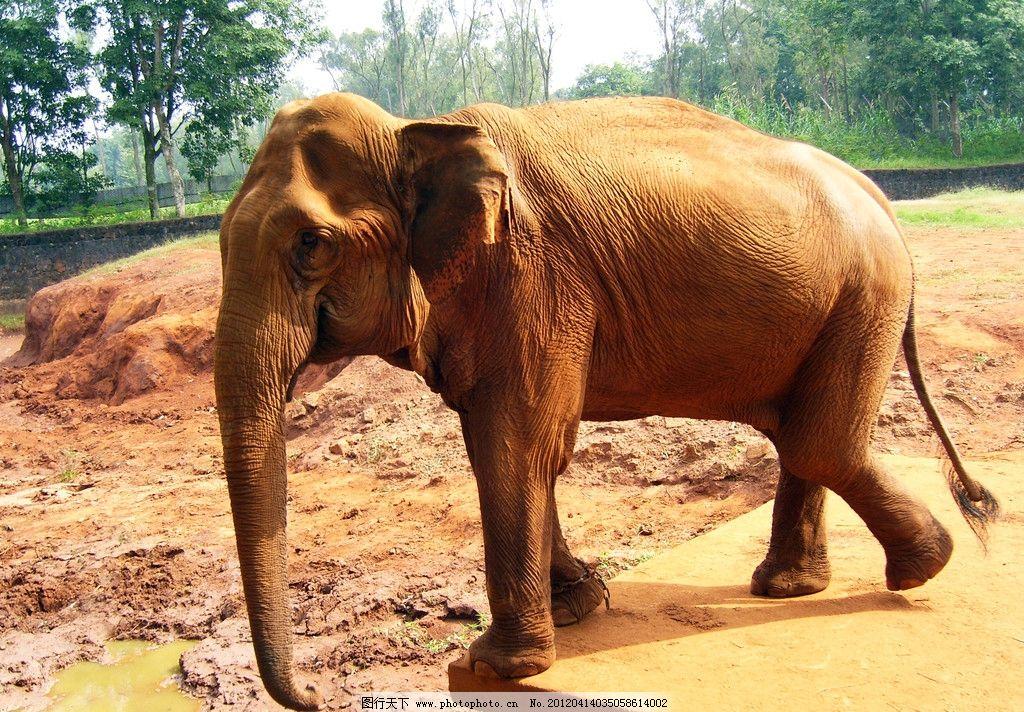 大象 动物园 野生动物 生物世界 摄影 300dpi jpg
