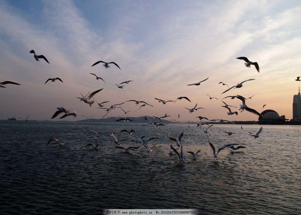 青岛栈桥落日 青岛 栈桥 风光 大海 海滩 沙滩 海鸥 海鸟 岛类 飞翔