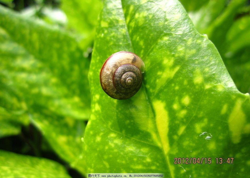 蜗牛 动物 植物 绿色植物 摄影作品 野生动物 生物世界 摄影 180dpi