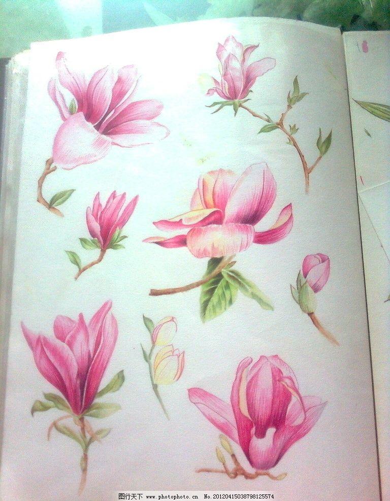 玉兰花 手绘 工笔花卉 美术绘画 文化艺术 摄影 300dpi jpg