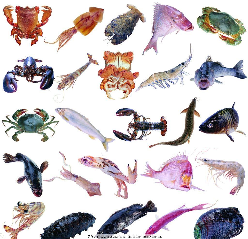 海鲜食材 海鲜 食材 乌贼 螃蟹 吓 鱼 海参 贝 鳝 鲶 设计模板 海报设