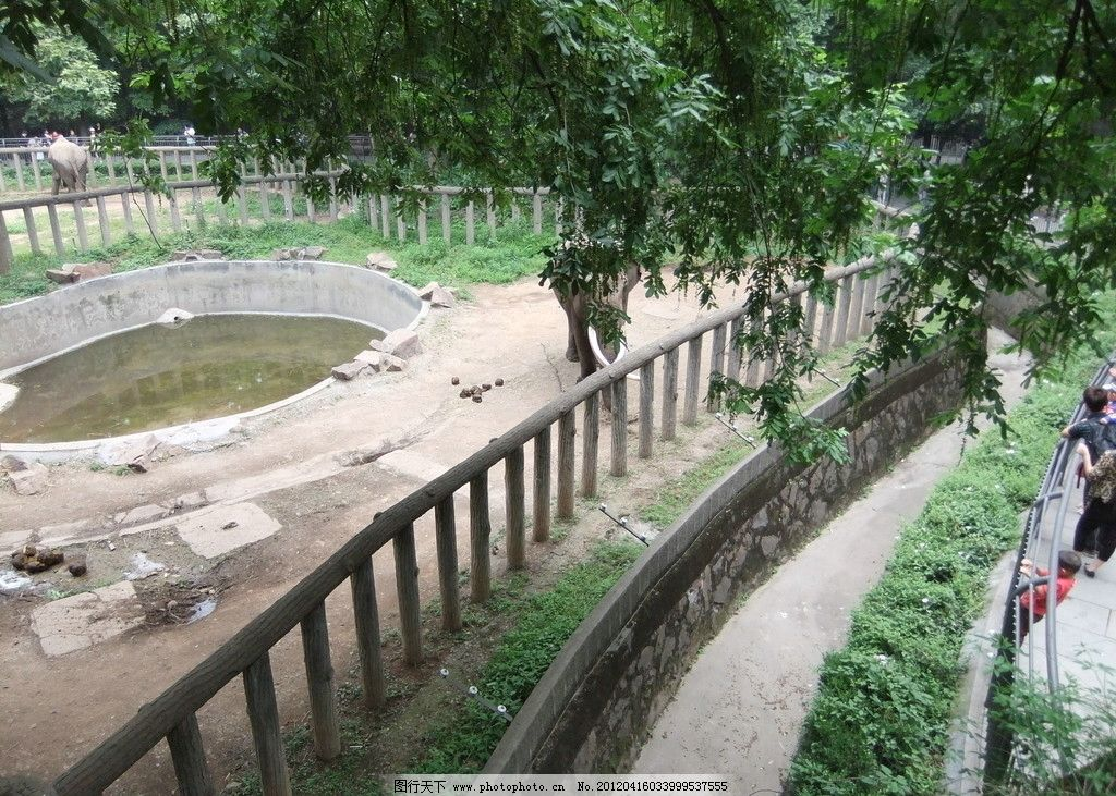 杭州动物园大象 杭州动物园 大象 游客 围栏 栅栏 水池 国内旅游 旅游