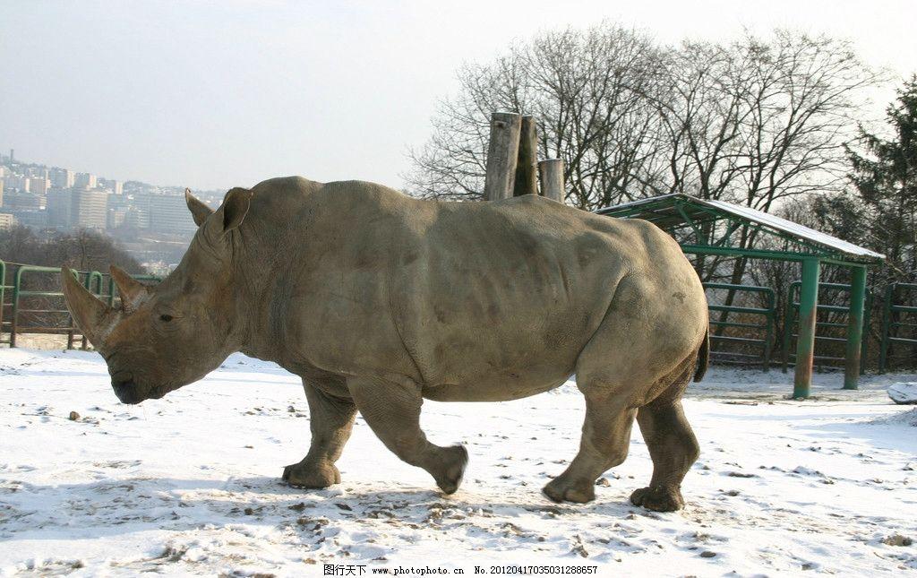 犀牛 动物 摄影