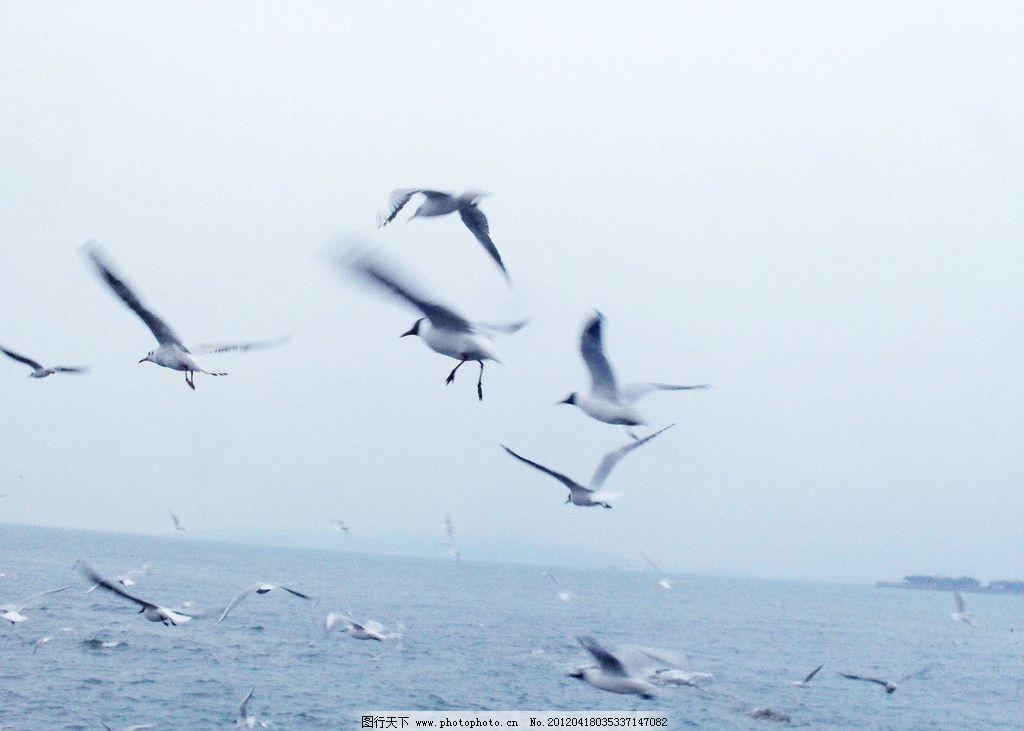 大海和海鸥 鸟 海浪 海鸟 青岛 风景 鸟类 生物世界 摄影