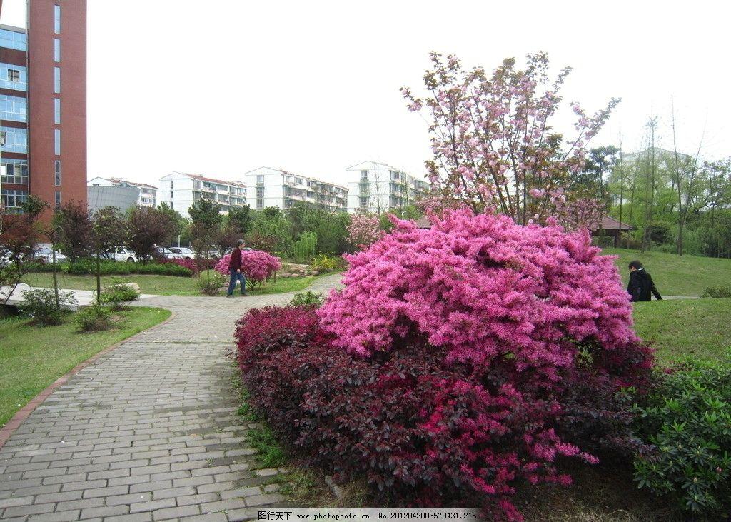 花灌木 红色花植物