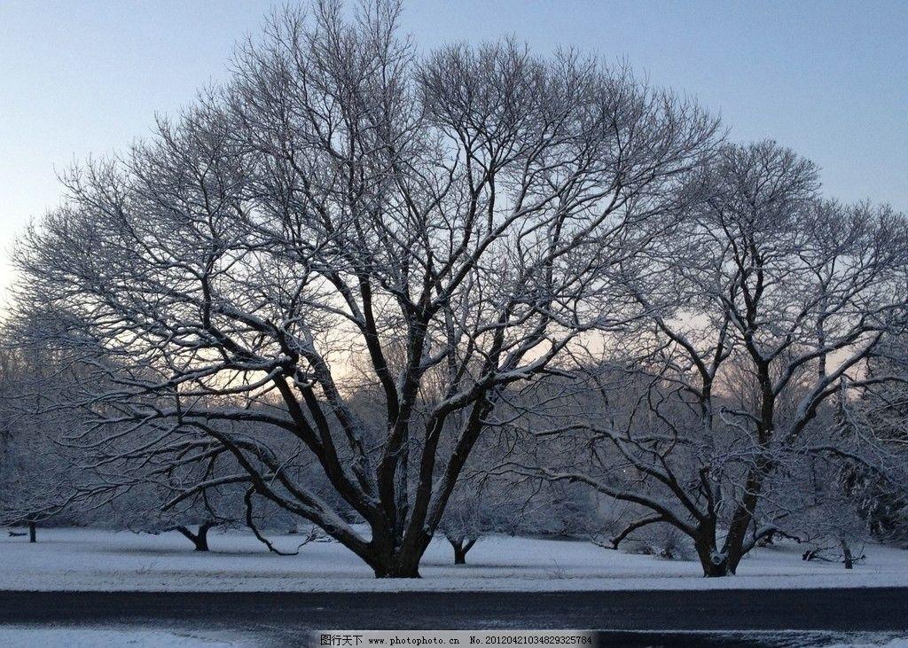 雪树 雪山 山水风景 寒冷 墙纸 背景 公园 早晨 冬天 自然风景 自然景