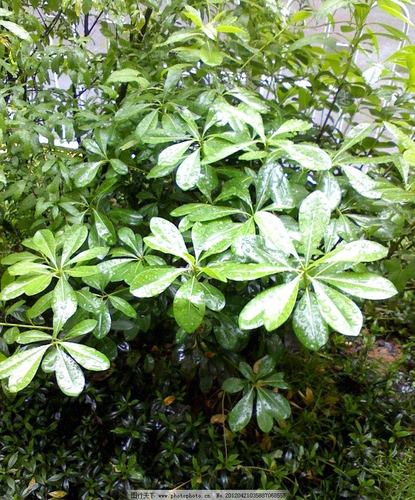 小树水滴 小树 水滴 春天 发芽 树木树叶 生物世界 摄影 72dpi jpg