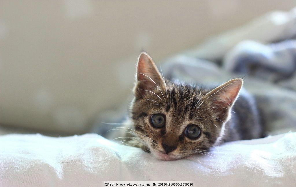 小猫 猫咪 动物 宠物 72dpi     猫咪的世界 其他生物 生物世界 摄影