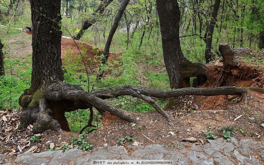 树根 树木树叶