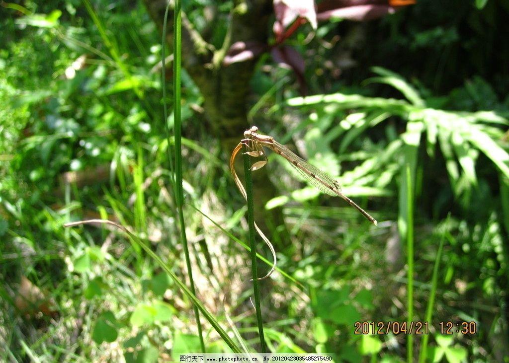 小蜻蜓 花草 昆虫 动物 植物 生物 生物世界 摄影